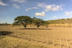 Cuban Pasture near Cienfuegos (Tom Kilroy) Tags: cuba cienfuegos fence nature ruralscene farm agriculture outdoors landscape tree field grass sky scenics meadow summer nopeople pasture land nonurbanscene hill greencolor yellowtrees