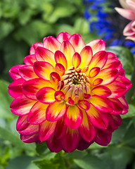 Dahlia Flames (s.d.sea) Tags: flower flowers floral colorful spring chicago botanic botanical garden pentax k5iis illinois northshore glencoe midwest dahlia flames fire petals red yellow multicolor