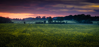Farmland at dusk