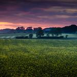 Farmland at dusk thumbnail