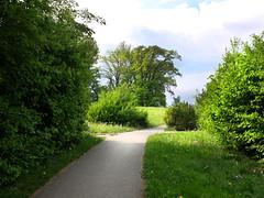 A walk - (rotraud_71) Tags: bayern traunstein way bushes trees sky