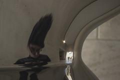 Autorretrato (robertosanchezsantos) Tags: luxemburgo luxembourg europa europe travel viaje arte art abstracto abstract urbano urban architecture arquitectura edificio ciudad anochecer luces lights museo museum moderno mudam líneas lines persona person gente reflejo reflection portrait people autorretrato selfportrait