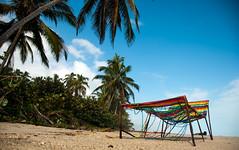 Olvidada (Cris Ruano) Tags: plastico plastic debris contaminación pollution beach colombia tayrona caribe palmera palm tree