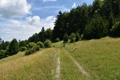 DSC_1921 (gregorv) Tags: slovenia slovenija kum planine mountains mountain nature narava