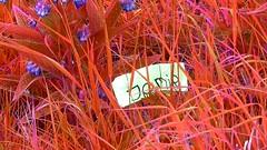 My name is Jomir (JomirBrands) Tags: jomir jomirbrands mynameisjomir firstsignals firstsings firstsign selfie water nature helloworld myworld writer songwriter music flickr newtoflickr newonflickr photo photography photographer picture new newflickr first firstvideo filter screenshot youtube youtuber newyoutuber newtoyoutube newonyoutube 2018 2k18 blue black color edit edited portrait grass red purple name