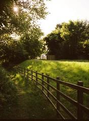 (Esmik D'Aguiar) Tags: summer sun golden fence wood fujifilm ga545zi portra colwick nottingham ng4 park footpath trees green