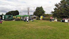 KIncardine-on-Forth - Whippet racing (bellrockman2011) Tags: whippets racing riverforth longannet