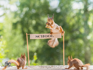 red squirrel is holding a bell