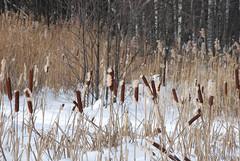 Зимовий ліс  InterNetri 27