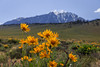 Eastern Sierra Spring 2018 (Jeffrey Sullivan) Tags: wildflowers mono lake basin easternsierra sierranevada leevining california united states usa monocounty landscape nature travel night photography canon eos 6d photo copyright 2018 jeff sullivan june lupine mules ears
