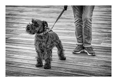 Dog 5 (GDWilson1000) Tags: hastings east sussex silver efex pro2 street