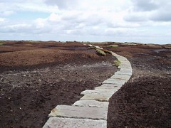 How To Cross A Bog Ann Style!!! (PointyPeakLover) Tags: bog boggy soil landscape paved road