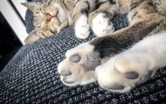 Paws!! (mlpix.co.uk) Tags: iphone iphonex kitty sleepy paws cat