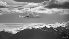 Fliying home (Luis GA) Tags: nikon d3100 blackandwhite bw landscape iceland bird sky mountain lugamor islandia blanco y negro