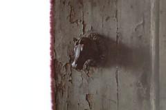 Pomello a testa di cavallo (laetitia.delbreil) Tags: film filmphotography argentique análogo analogico ishootfilm filmisback filmisawesome filmisnotdead westillcare colour color colore couleur olympus olympus35rc zuiko42mm128 fujisuperia200 iso200 rangefinder telemetrica siena sienne italia italy fixedfocallength pomello doorknot vintagecamera firstpicoftheroll primadelrullino premièrephoto olddoor analogsoul jesuisargentique ifeelfilm believeinfilm