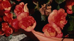 Red flowers. Red blood. Red life. (alessiazea) Tags: flowers red flower garden school