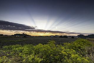 Sunrise over fields - Sineu, Mallorca.