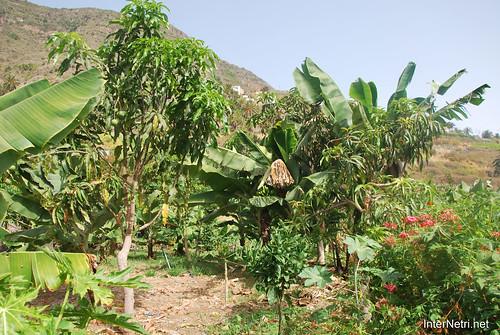 Канарський сад-город, Гомера, Канарські острови  InterNetri  0634