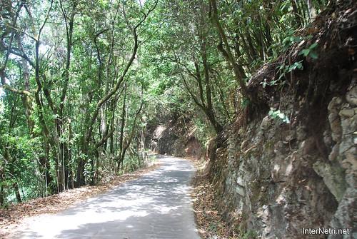 Національний парк Гарахонай, Гомера, Канарські острови  InterNetri  0733