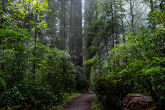DSC_1717.jpg (johnny.allen100) Tags: redwood forest northern california