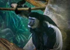 Lincoln Park Zoo Chicago (donald kisseberth) Tags: chicagoil lincolnparkzoo