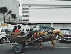 Horsetrain #delman #dokar #andhong #horsetrain #streetphotography #photography #culture #traditional #street #horse (wulanapriiii) Tags: street horse dokar andhong traditional photography horsetrain streetphotography culture delman