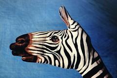 Handimals - Zebra (moraal23) Tags: hansimals hände bemalung zebra painting