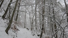 How the forest becomes magical in winter (ViveLaMontagne67) Tags: france vosges grandfaudé forêt brouillard neige hiver arbres branches trees winter snow forest fog white blanc