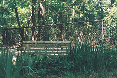 The Bench (Matthew Ellett) Tags: bench green foliage nature filmphotography woodland overgrown