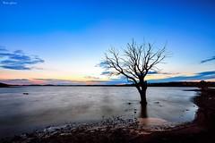 Tree long exposure (Peideluo) Tags: tree longexposure largaexposicion night water waterscape serenidad landscape landscapenight árbol cielo