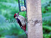 Great spotted woodpecker (️️️Sassy️️️) Tags: greatspottedwoodpecker woodpecker bird black red white sonycybershot sony sonycamera birdfeeder camera woods colours countryside clear classic critter tree trees bestphoto bestpic beautiful beauty bright britain british blur bokeh brown photographer photo photographypassion photography photooftheday picoftheday photos passion photographylover pretty dsch400 day display digital flikr flikrcentral flickr flickrcentral lens