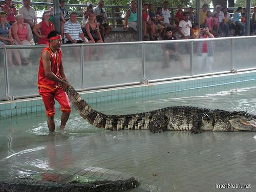 В пащу крокодилу Паттайя Таїланд Thailand InterNetri 12
