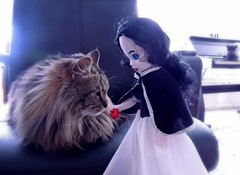 Kitty Cat decided: That Apple isn't poisoned, it's only plastic! (pianocats16) Tags: cat kitty cute fluffy snow white living dead doll apple fairy tale grimm