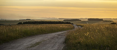 Sunset Road and Distant Smoke (stevedewey2000) Tags: wiltshire salisburyplain landscape spta sptaeast sunset golden yellow grasses grassland track road byway minolta100200 explored explore