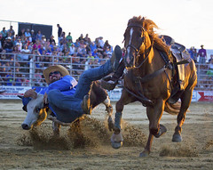 (emmett.hume) Tags: cowtown west rodeo horse cowboy livestock steer wrestling competition prosports daring grit leap transition 1025fav