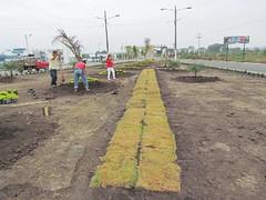 Siembran plantas y adecentan el Hemiciclo a Las Banderas y Los Raidistas (GadChoneEC) Tags: siembra planta adecentamiento hemiciclo lasbanderas losraidistas
