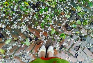 those #white #flowers