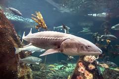 underwater imagery... (4/4) (steveleenow) Tags: vancouver vancouverbc vancouverbccanada vancouverbritishcolumbia vancouverbritishcolumbiacanada britishcolumbia canada vancouveraquarium aquarium plastic plastics waste junk trash