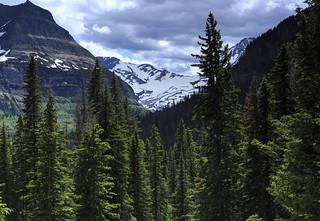 5IMG3119 Jackson Glacier
