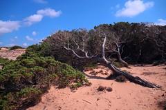 Solo vento..Only wind... (giobertaskin) Tags: scivu spiaggia sardegna sardinia southwestsardinia vento fortevento maestrale natura natural naturale bellezza selvaggia canon canoneos canoneos5dmarklll scivuscivu