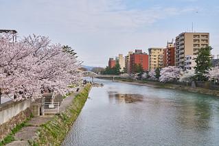 浅野川 / Asanogawa