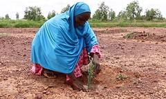 femme plantation