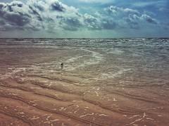 (yosmama151) Tags: mextures texas water ocean seashore sea shoreline shore beach gulfofmexico gulfcoast galvestonisland galveston bird