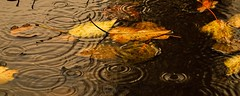 9192 more-1-16 (2) (erosmf05) Tags: reflections water leaves autumn