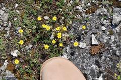 Tiny flowers (petrOlly) Tags: europe europa slovensko slowakei slovakia słowacja sk2018 geyser sivábrada spiš flower flowers nature natura przyroda