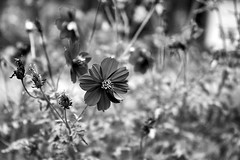 black and white (leonlee28) Tags: sonya7ii sonymirrorless sonyfe2870mm bokeh bokehlicious bokehoftheday leaves leonlee leonlee28 photooftheday mirrorless photography black white blackwhite blackandwhite blackandwhitephotography blur nature naturallighting outdoorphotography sel2870