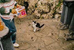 Waiting for food (Bruno Naredo) Tags: italia italien italy palermo analog analogphotography analogue canon fuji fujifilm fujifilmsuperia200 streetphotography streetlife streetphotographyinternational italian filmcommunity capturestreets colourstreetphotography grottaazzurra fishing animal cats fish summer pescar gatos travel fotografiaanaloga