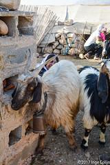 20180330-_DSC0195.jpg (drs.sarajevo) Tags: sarvestan ruraliran iran nomads farsprovince chamsatribe
