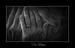 Unbounded grief. (timgoodacre) Tags: blackwhite blackandwhite black monochrome mono hands face ear person portrait emotion