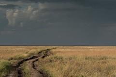 Serious Clouds Ahead (iamfisheye) Tags: olympus safari omd asilia serengetinationalpark zuiko f2835 lens mkii 50200mm camera tanzania2018 namiriplains kit zd em1 oly2